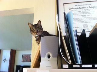 Cat-helper-2