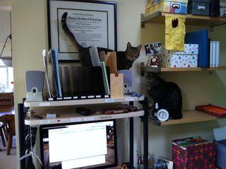 Cat-helpers-1